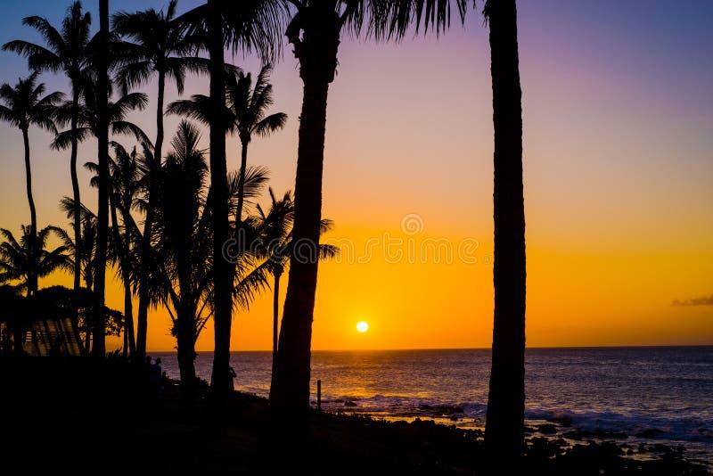 Φοίνικες καρύδων, χρυσό ηλιοβασίλεμα Maui στοκ εικόνα