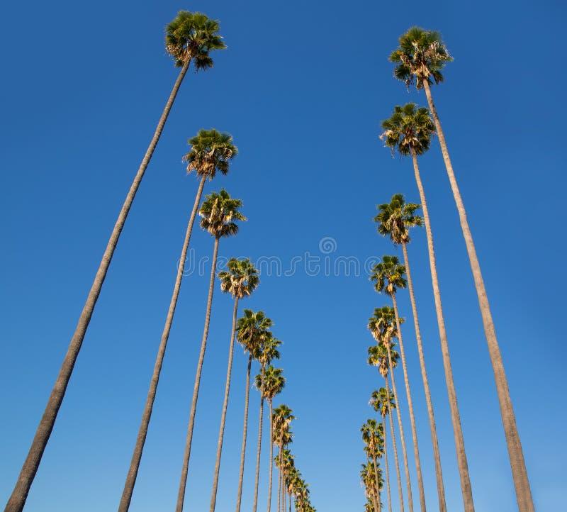 Φοίνικες Λα Λος Άντζελες σε μια σειρά χαρακτηριστική Καλιφόρνια στοκ εικόνα