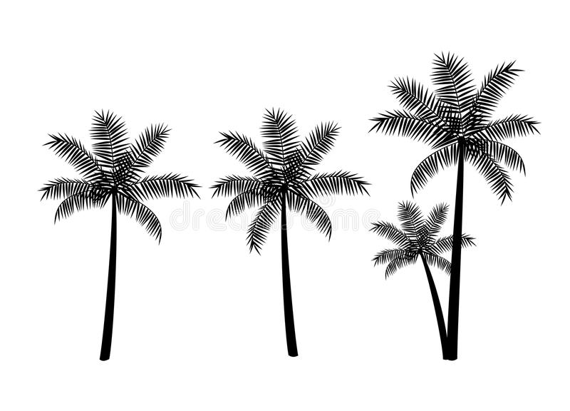 Φοίνικες, μαύρες σκιαγραφίες που απομονώνονται στο άσπρο υπόβαθρο διανυσματική απεικόνιση
