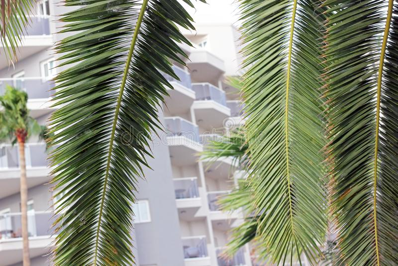 Φοίνικες μπροστά από ένα ξενοδοχείο στοκ φωτογραφίες με δικαίωμα ελεύθερης χρήσης