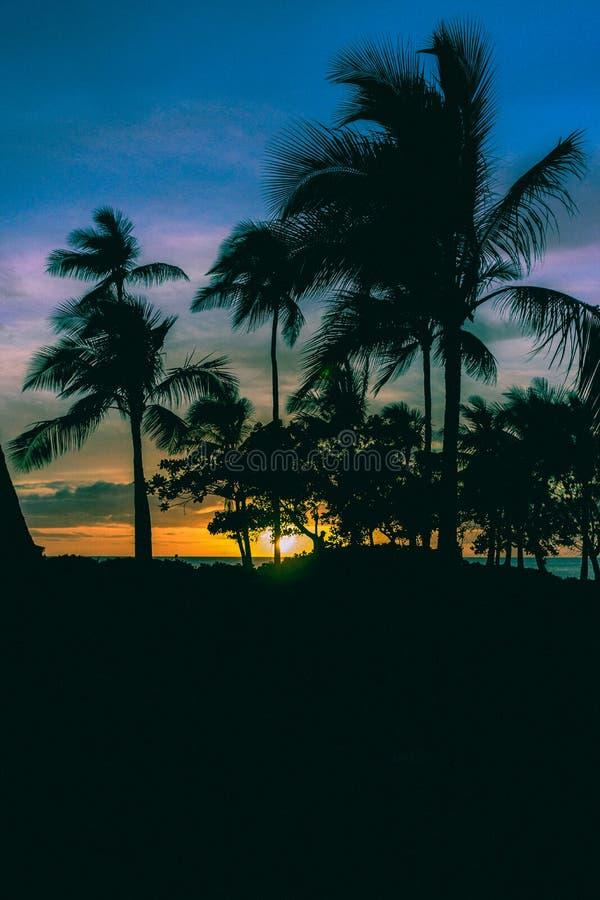 Φοίνικες μπροστά από ένα όμορφο ηλιοβασίλεμα σε έναν τροπικό παράδεισο στοκ εικόνες