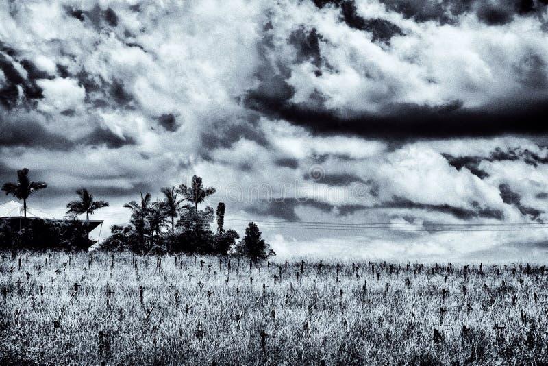 Φοίνικες στα νεκροταφεία  πόσο εξωτικός στοκ φωτογραφίες
