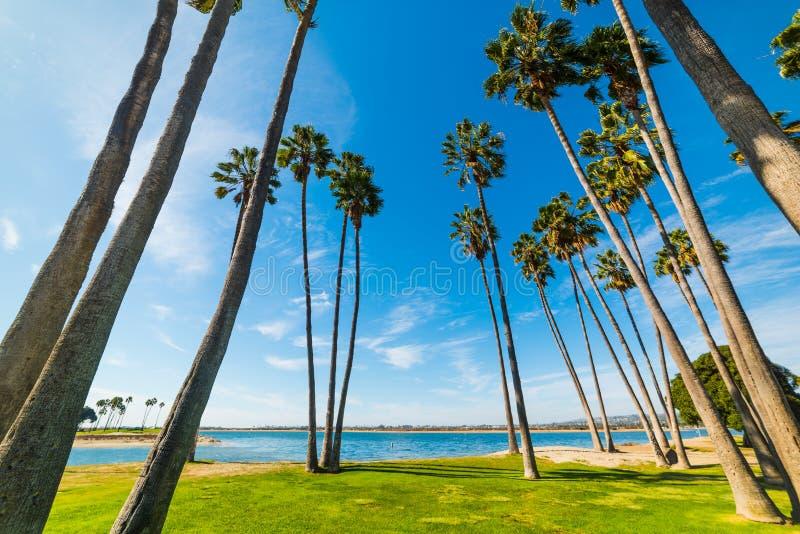 Φοίνικες στην ακτή του Σαν Ντιέγκο στοκ φωτογραφία με δικαίωμα ελεύθερης χρήσης