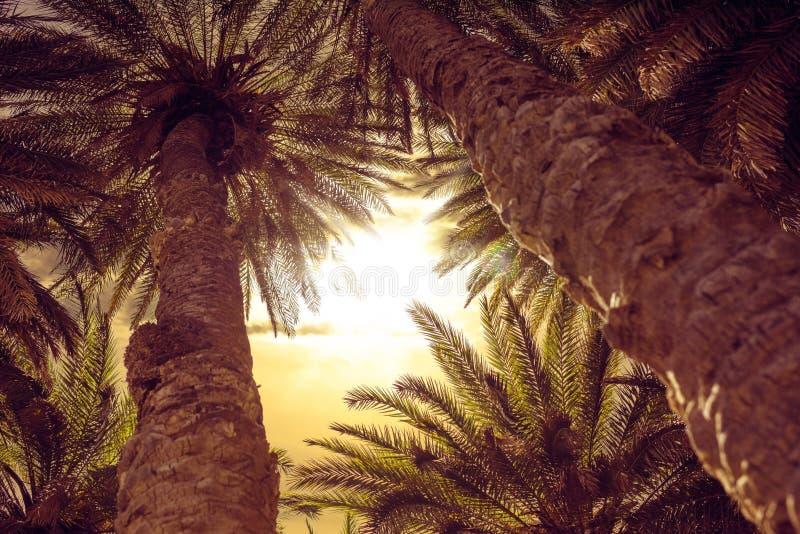 Φοίνικες στην παραλία της Σάντα Μόνικα στοκ φωτογραφίες με δικαίωμα ελεύθερης χρήσης