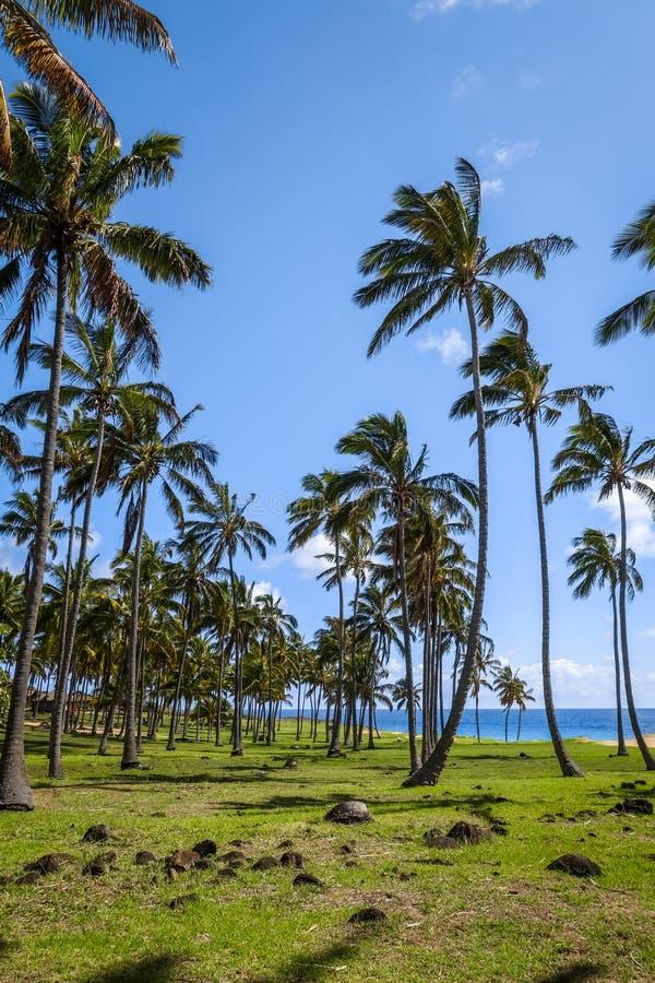 Φοίνικες στην παραλία Anakena, νησί Πάσχας στοκ φωτογραφίες