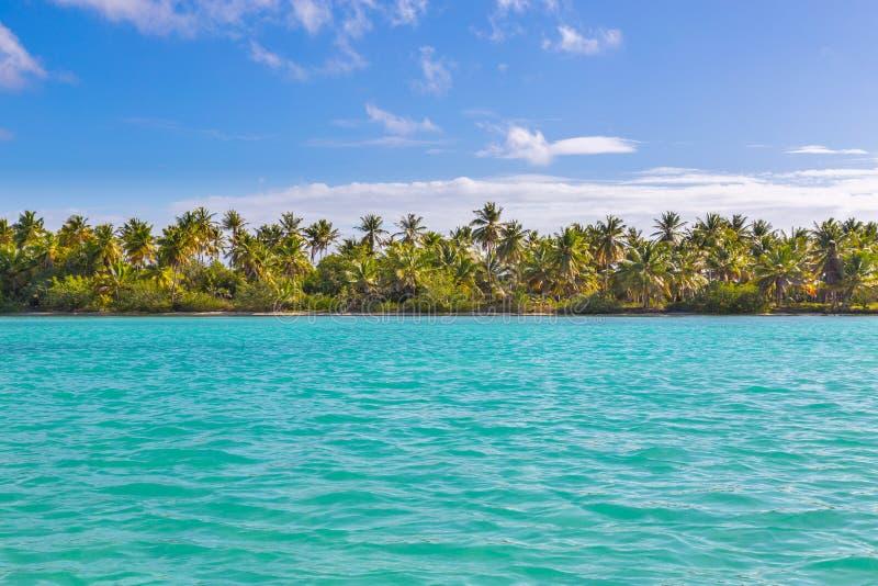 Φοίνικες στην παραλία της Isla Saona στοκ φωτογραφίες