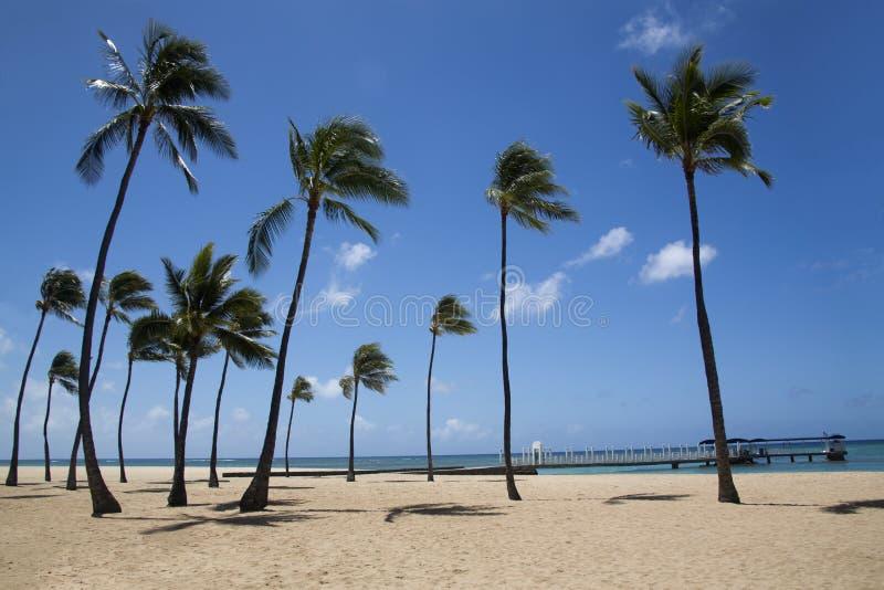 Φοίνικες στην παραλία στοκ φωτογραφία