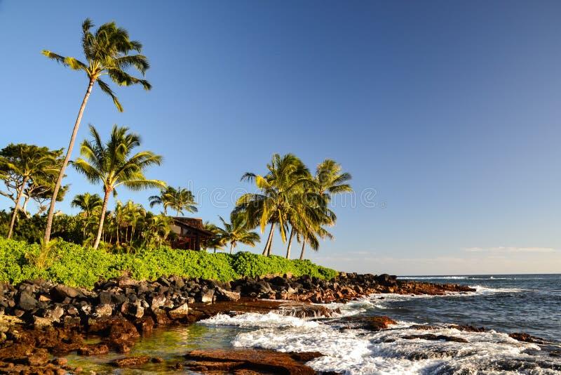 Φοίνικες στην παραλία Lawai - Poipu, Kauai, Χαβάη, ΗΠΑ στοκ εικόνες