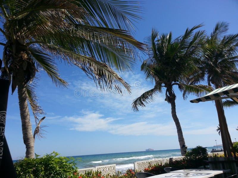 Φοίνικες στην παραλία Qurum στοκ φωτογραφίες