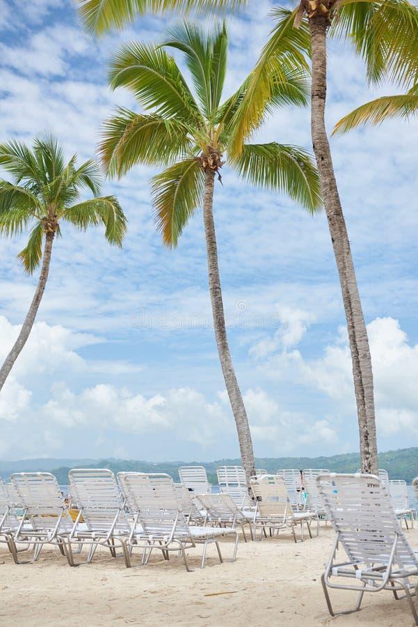 Φοίνικες στην τροπική παραλία Cayo Levantado στη Δομινικανή Δημοκρατία με τις έδρες γεφυρών στοκ εικόνα