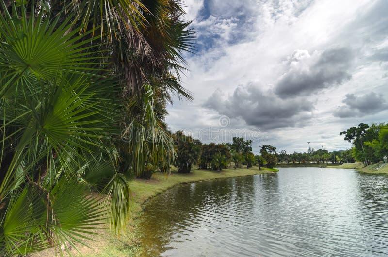 Φοίνικες στην όχθη της λίμνης στοκ εικόνες