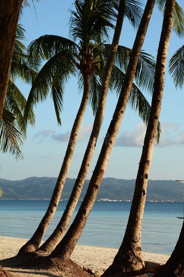 Φοίνικες στη Λευκή παραλία Νήσος Μπορακάι Ακλάν Δυτικές Βισάγιας Φιλιππίνες στοκ φωτογραφία με δικαίωμα ελεύθερης χρήσης