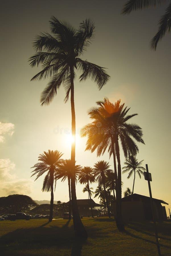 Φοίνικες στο ηλιοβασίλεμα σε Haleiwa, Oahu βόρεια ακτή, Χαβάη στοκ φωτογραφίες με δικαίωμα ελεύθερης χρήσης