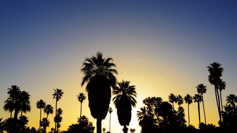 Φοίνικες στο ηλιοβασίλεμα στοκ φωτογραφία