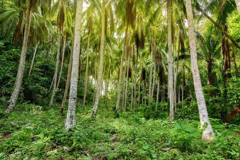 Φοίνικες στο τροπικό δάσος στοκ φωτογραφία με δικαίωμα ελεύθερης χρήσης