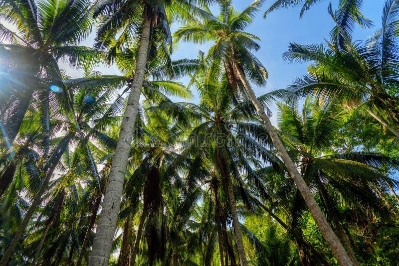 Φοίνικες στο τροπικό δάσος στοκ φωτογραφία