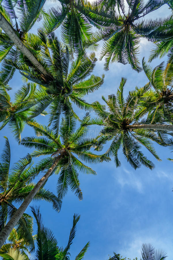 Φοίνικες στο τροπικό δάσος στοκ εικόνες