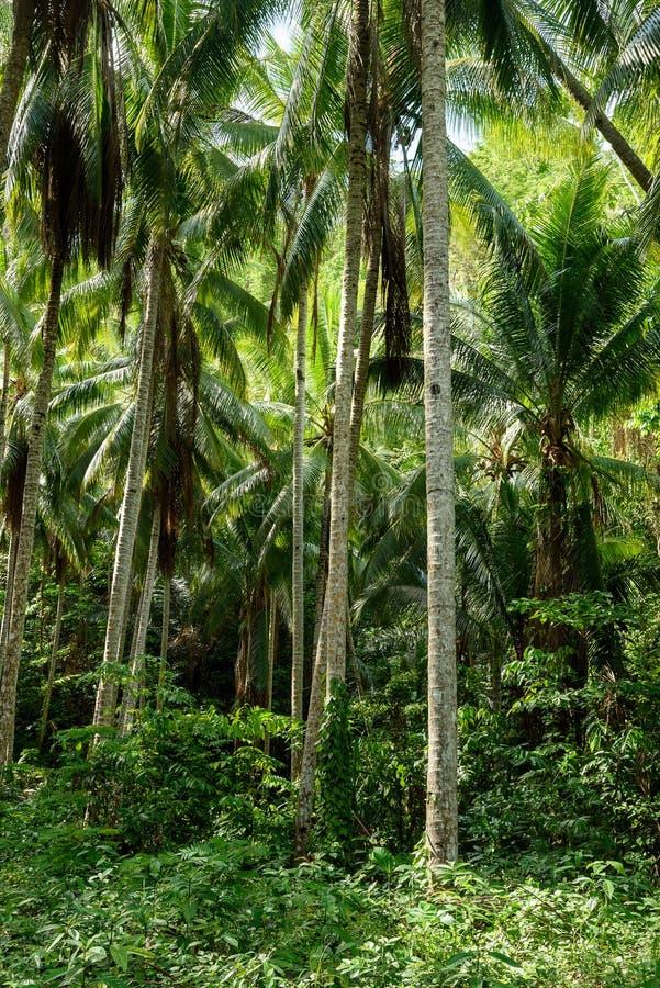 Φοίνικες στο τροπικό δάσος στοκ εικόνα
