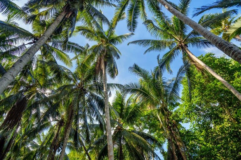 Φοίνικες στο τροπικό δάσος στοκ εικόνα με δικαίωμα ελεύθερης χρήσης