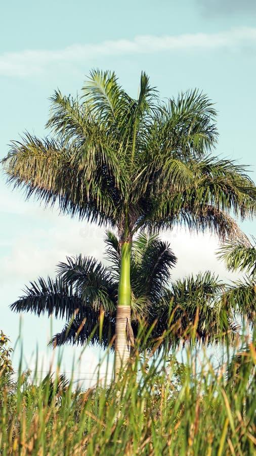 Φοίνικες στο Everglades στοκ φωτογραφία με δικαίωμα ελεύθερης χρήσης