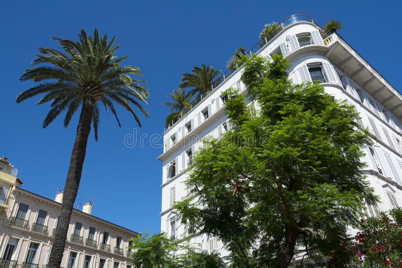 Φοίνικες των Καννών και προκυμαία πολυτέλειας που στηρίζεται σε γαλλικό Riviera στοκ φωτογραφίες με δικαίωμα ελεύθερης χρήσης