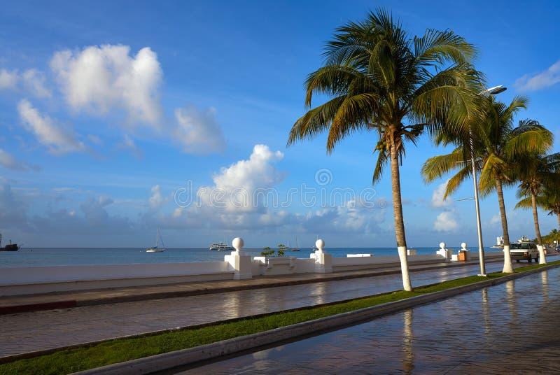 Φοίνικες Riviera Maya Μεξικό Cozumel στοκ εικόνα