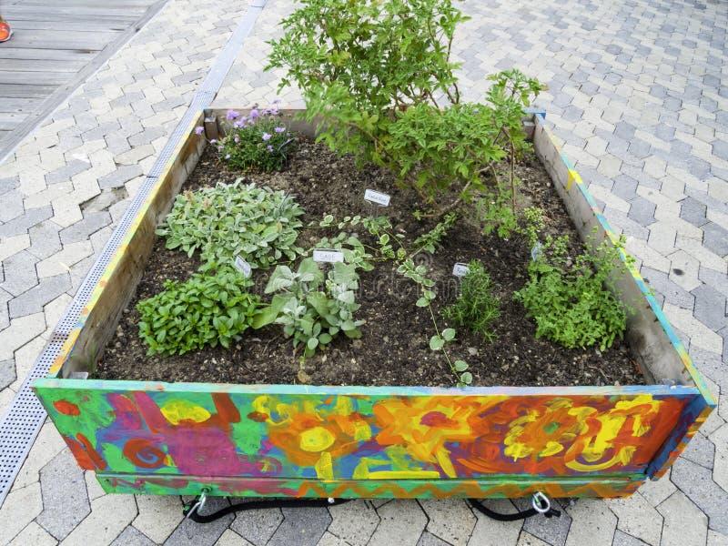 Φοβιτσιάρης κήπος χορταριών στοκ φωτογραφίες με δικαίωμα ελεύθερης χρήσης