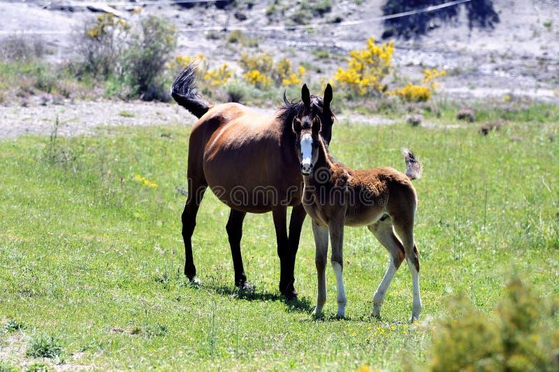 Φοράδα και foal της σε ένα λιβάδι στοκ φωτογραφίες