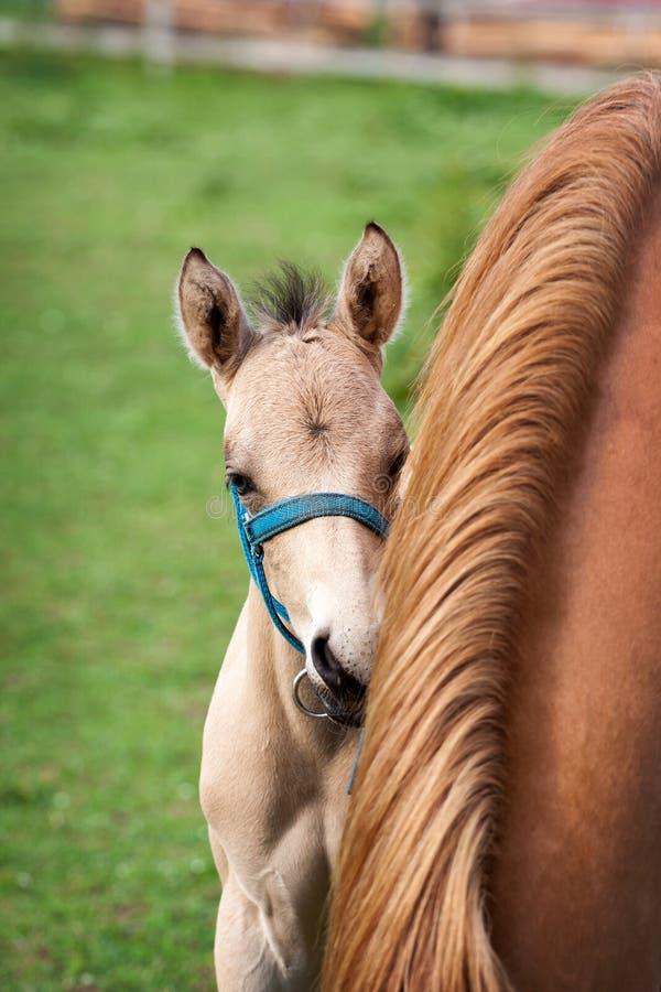 Φοράδα και foal της στοκ φωτογραφία με δικαίωμα ελεύθερης χρήσης
