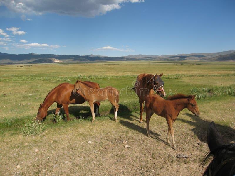 Φοράδες με foals στοκ εικόνες με δικαίωμα ελεύθερης χρήσης