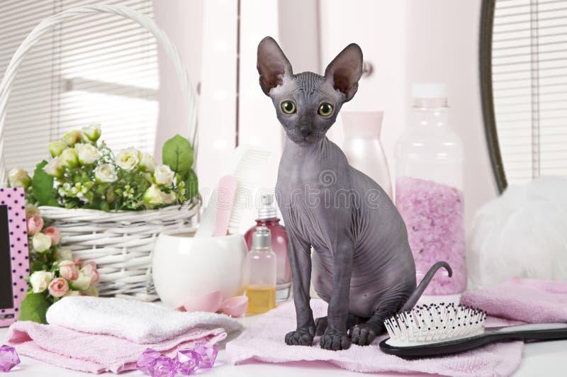 Φορέστε τη γάτα γατακιών Sphinx με μερικά toiletries στοκ φωτογραφίες