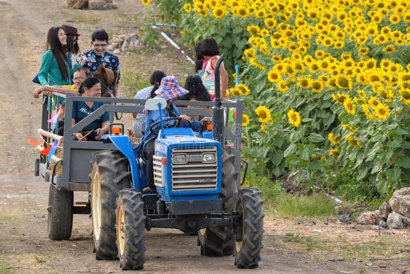 Φορτηγό στον τομέα ηλίανθων, Ταϊλάνδη στοκ εικόνα με δικαίωμα ελεύθερης χρήσης