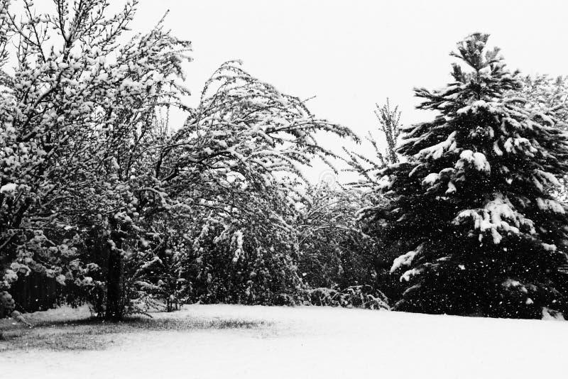 φορτωμένος χειμώνας δέντρων χιονιού στοκ φωτογραφίες