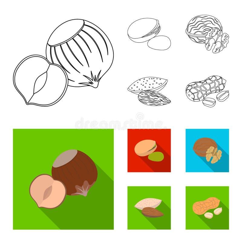 Φουντούκι, φυστίκια, ξύλο καρυδιάς, αμύγδαλα Διαφορετικά είδη καθορισμένων εικονιδίων συλλογής καρυδιών στην περίληψη, επίπεδο δι απεικόνιση αποθεμάτων