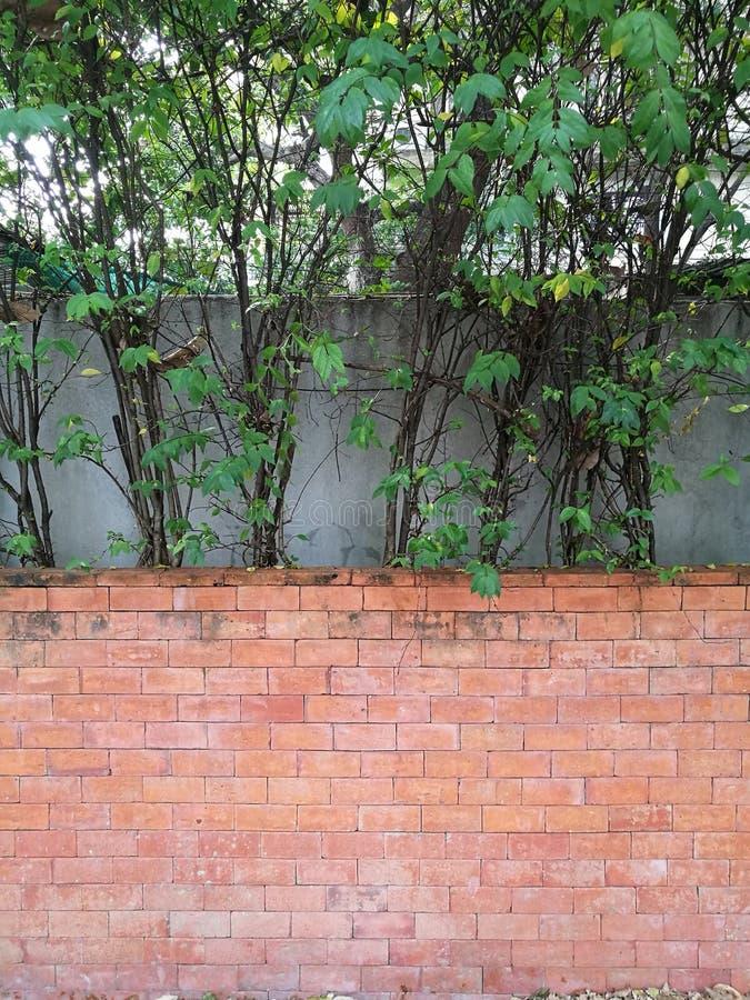 Φράκτης δέντρων και κόκκινος καφετής τοίχος φραγμών τούβλου στον κήπο κατωφλιών στο σπίτι στοκ εικόνες