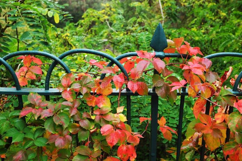 Φράκτης κήπων στοκ εικόνα