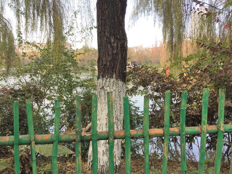 Φράκτης μπαμπού σε ένα κινεζικό πάρκο με ένα απομονωμένο δέντρο ιτιών και ένα υπόβαθρο λιμνών στοκ φωτογραφία