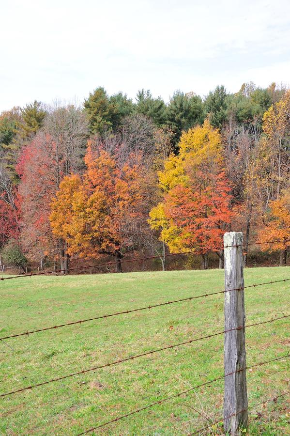 Φράκτης το φθινόπωρο στοκ φωτογραφίες