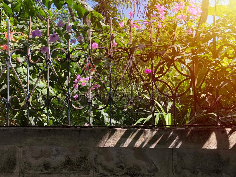 Φράκτης χάλυβα σκουριάς επάνω από το συμπαγή τοίχο στο μέτωπο πολλών δέντρων, ρόδινο λουλούδι πίσω, που προσθέτει την επίδραση φω απεικόνιση αποθεμάτων