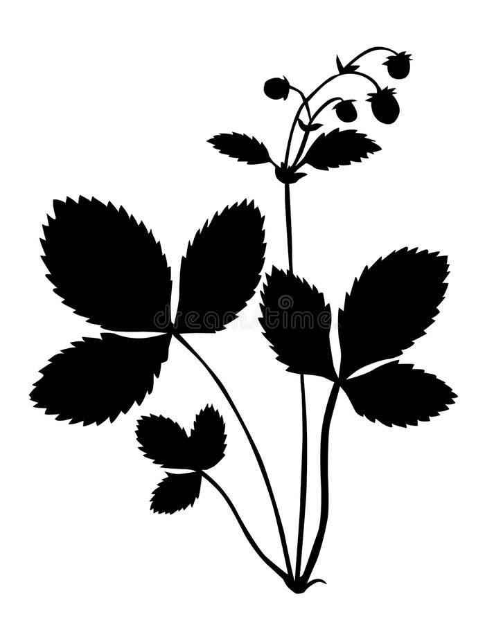 φράουλα θάμνων ελεύθερη απεικόνιση δικαιώματος