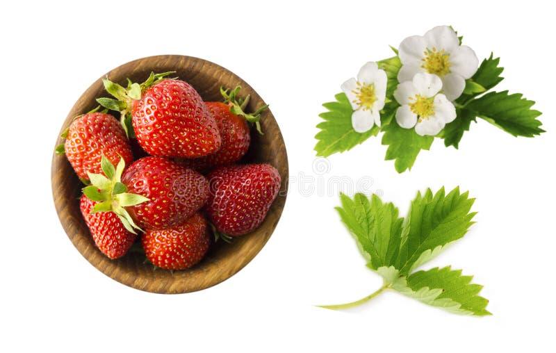 Φράουλα και λουλούδια φραουλών με τα φύλλα στο άσπρο υπόβαθρο Ώριμη κινηματογράφηση σε πρώτο πλάνο φραουλών Μούρο υποβάθρου Το γλ στοκ φωτογραφίες