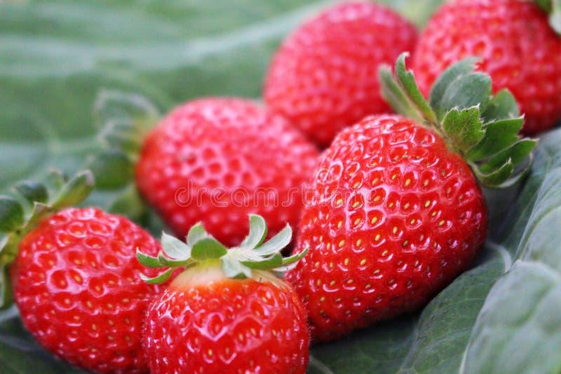 φράουλα λεπτομερειών στοκ φωτογραφία