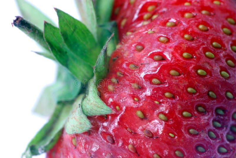 Φράουλα. Μακροεντολή στοκ φωτογραφία με δικαίωμα ελεύθερης χρήσης