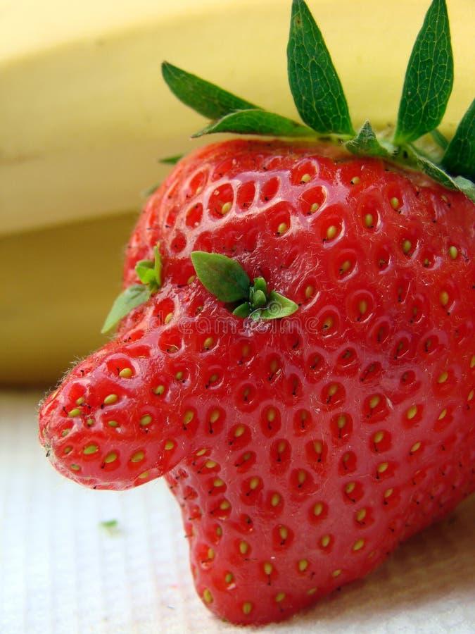 φράουλα τύπων στοκ φωτογραφίες με δικαίωμα ελεύθερης χρήσης