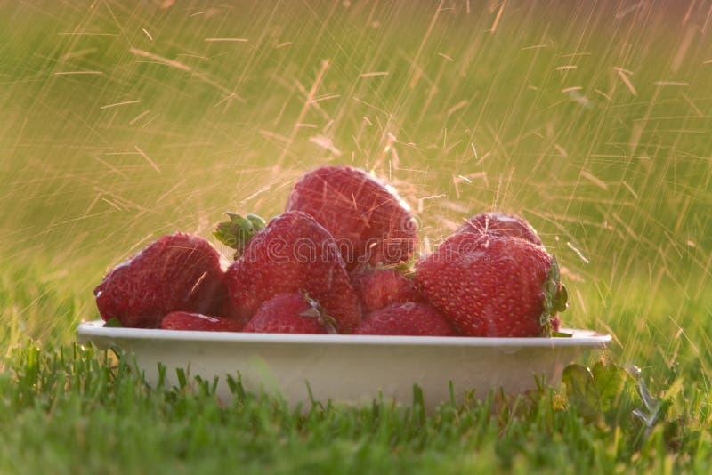 φράουλες βροχής κύπελλ&om στοκ εικόνες