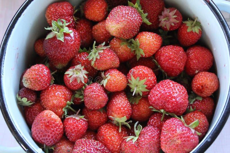 Φράουλες σε μια λεκάνη στοκ φωτογραφία με δικαίωμα ελεύθερης χρήσης