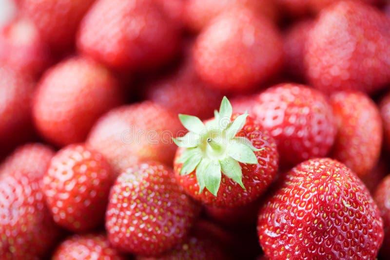 φράουλες στοκ εικόνα με δικαίωμα ελεύθερης χρήσης