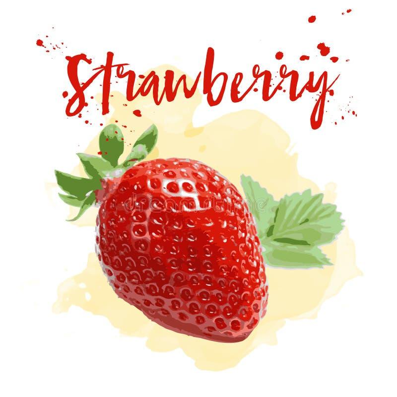 Φράουλα που σύρεται στο watercolor Διανυσματικό EPS 10 στοκ εικόνες με δικαίωμα ελεύθερης χρήσης