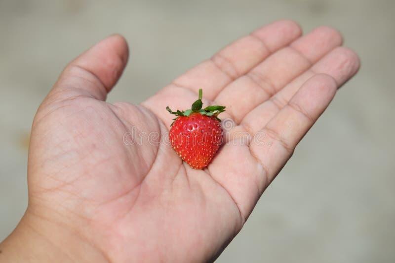 Φράουλα στη διάθεση στοκ εικόνες