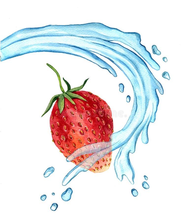 Φράουλα σχεδίων Watercolor με τον παφλασμό νερού διανυσματική απεικόνιση